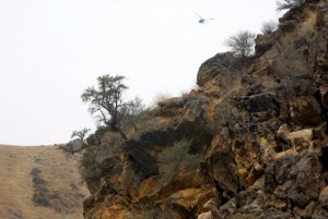Helicopter doing game surveys in Frank Church Wilderness © Ken Cole