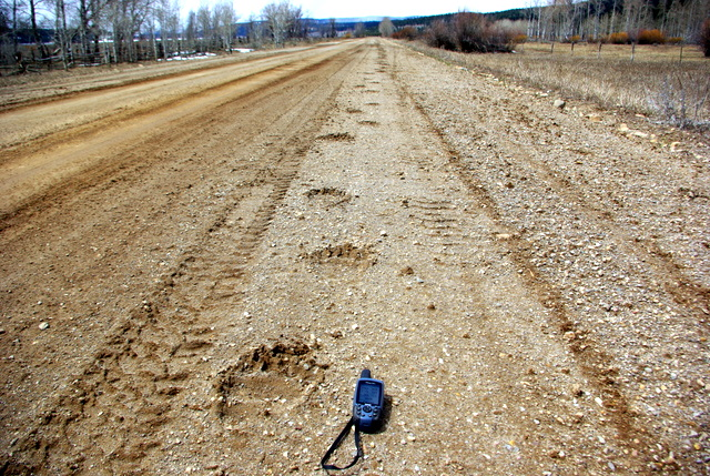 Grizzly tracks north of Island Park Reservoir 5/4/2010 © Ken Cole