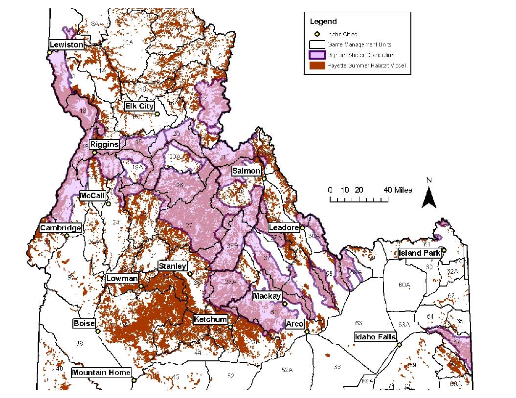 Bighorn distribution and habitat in central Idaho