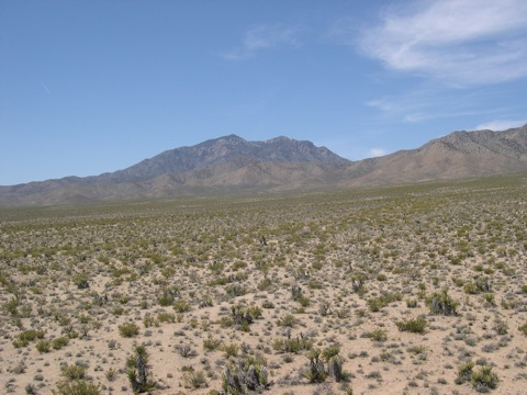 Part of the Ivanpah power plant site with Clark Mountain Wilderness in the distance. (2009) © Michael J. Connor, Ph.D.