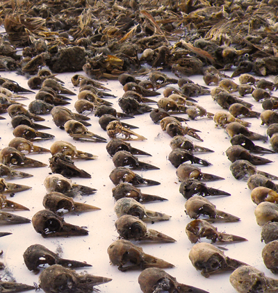 1 million birds might be dying each year due to pvc mining for Nevada game and fish