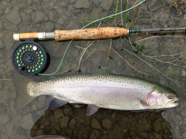 Lahontan cutthroat trout (not the Pyramid Lake strain) caught in Mann Lake, Oregon.