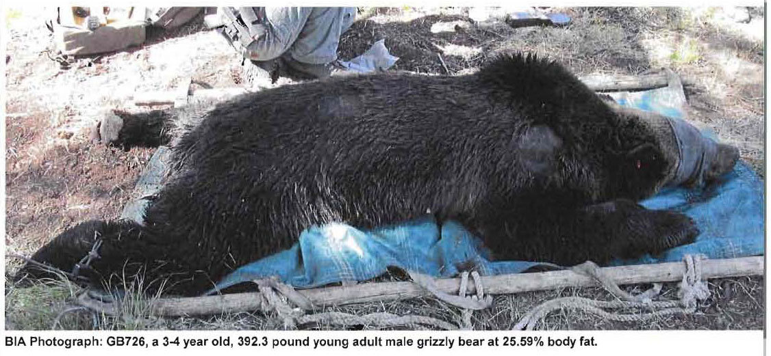 Grizzly_#726