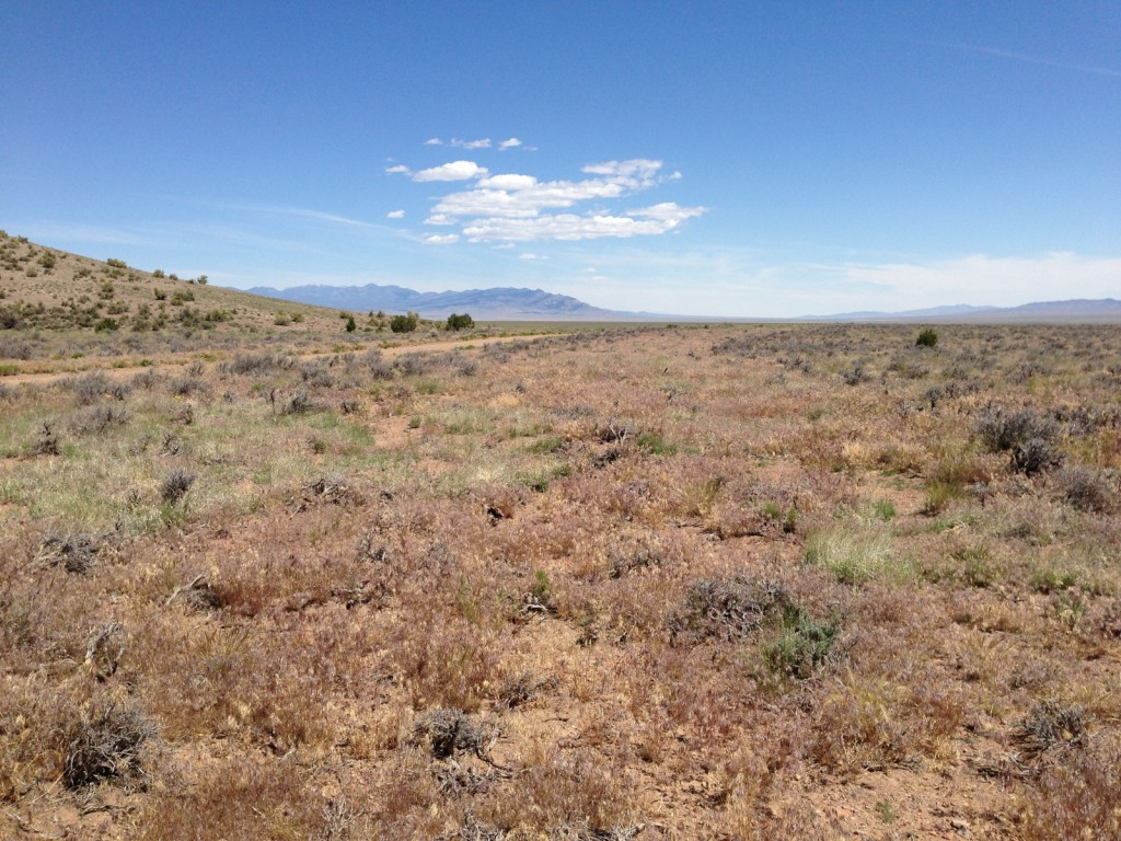 Cheatgrass response to mowing in sagebrush, Hamblin Valley, NV.