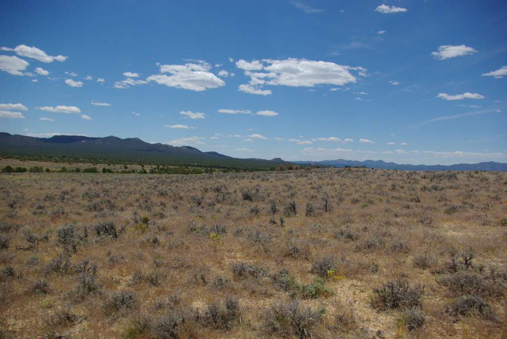 Cheatgrass response to Tebuthiuron treatment, Lake Valley, NV.