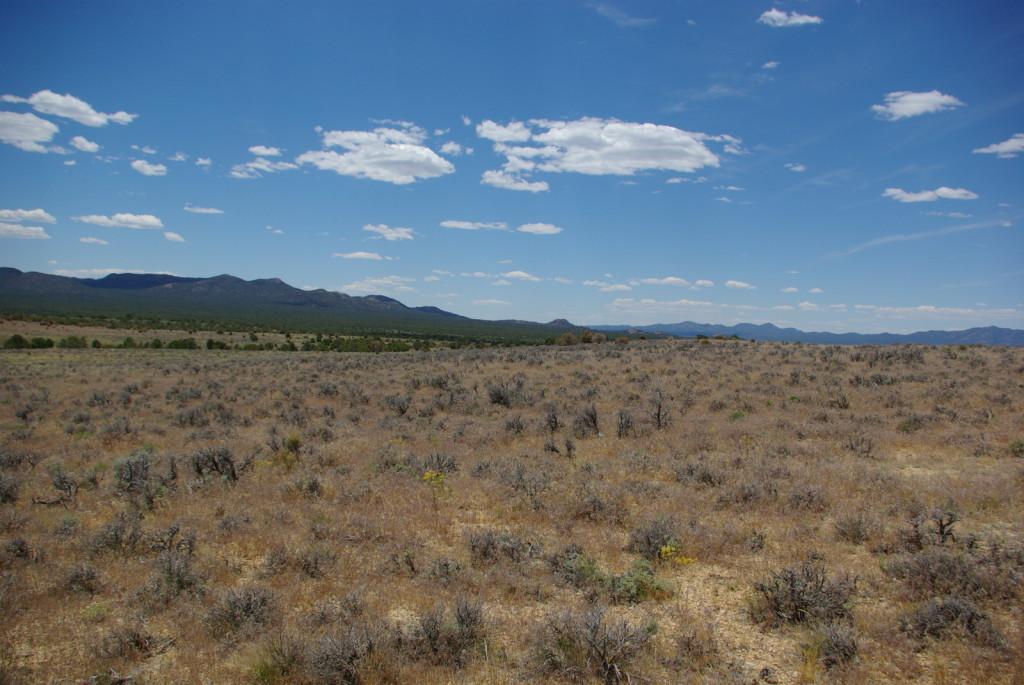 Cheatgrass response to Tebuthiuron treatment, Lake Valley, NV.