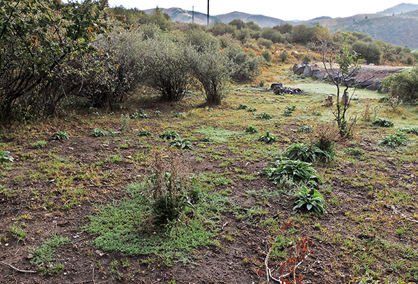 More than a month after cattle grazing.. Pocatello Grazing Allotment