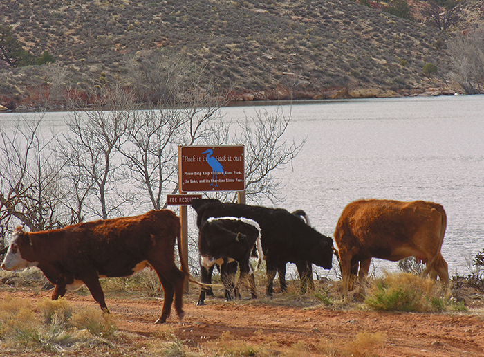 "Gunlock State Park, southern Utah. ""Help keep Gunlock State Park, the Lake and its Shoreline, litter free."""