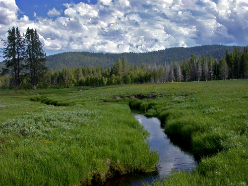 Nameless Creek on the south boundary of the Frank Church Wilderness. Copyright Ralph Maughan