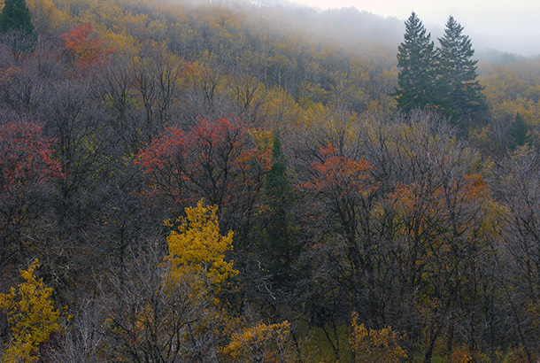 Autumn in Wellsville Canyon, UT. Copyright Ralph Maughan