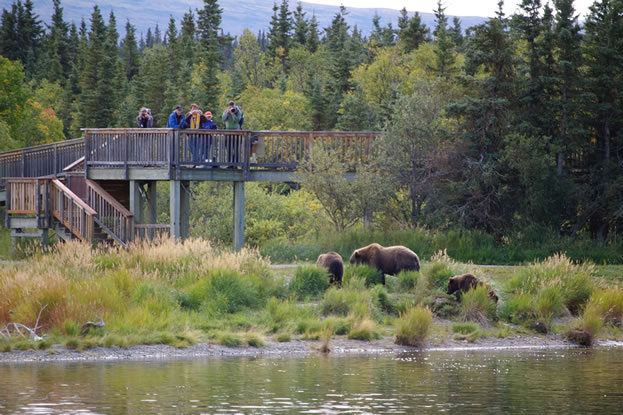 Brown Bears and people, Viewing Platform, Brooks Camp, Katmai National Park. Photo by Barrie Gilbert.