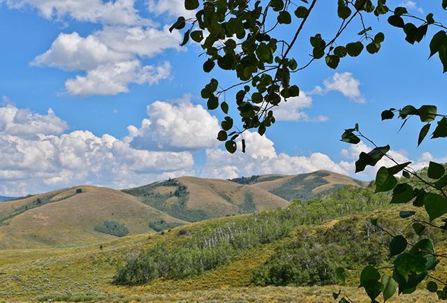 "Wolf Mountain is the name of this gentle ridge in the vicinity of Soda Springs, ID. Nowadays a rare wolf actually crosses this namesake ridge. In late September 2011, I was talking with a hunter near the base of the ridge, he warned me that ""there are wolves in these hills now. Be careful!""  ;-)"