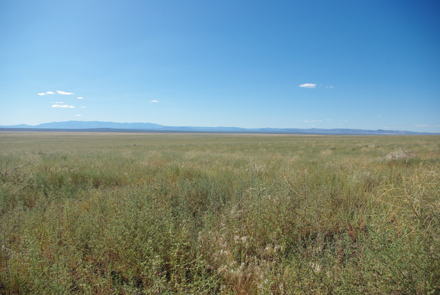 Forage kochia monoculture planted after the Long Draw fire of 2012. © Ken Cole