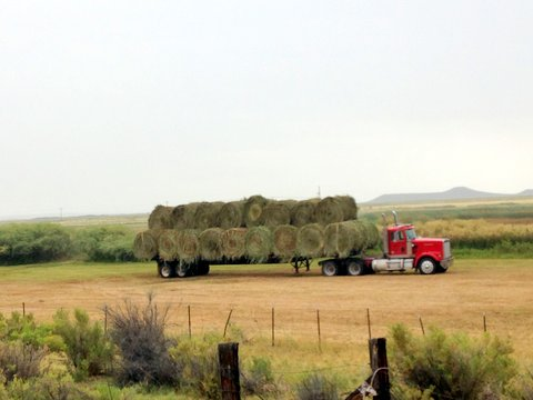 Hay bales about to be trucked off the Refuge. Photo Dr. Steve Herman.