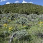 It's springtime on the sagebrush steppe. SE Idaho. Copyright Ralph Maughan