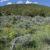 It's springtime on the sagebrush steppe. SE Idaho. Copyright Ralph Maughan