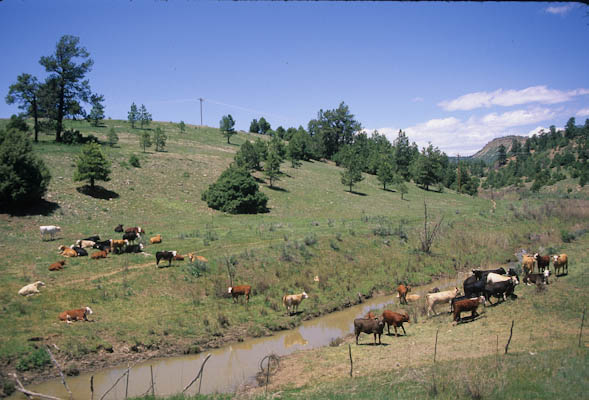 Livestock Influence On Soil Carbon Storage
