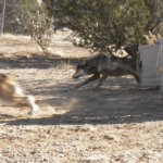 https://tesf.org/project/mexican-wolf/
